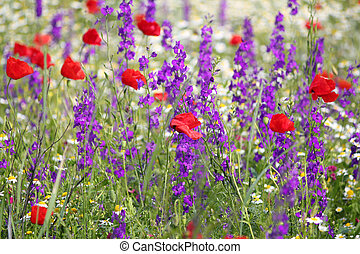 spring meadow with wild flowers