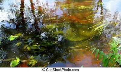 river underwater flora