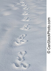 Traces of a hare on a snow - Traces of a hare on the white...