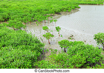 Red Mangroves