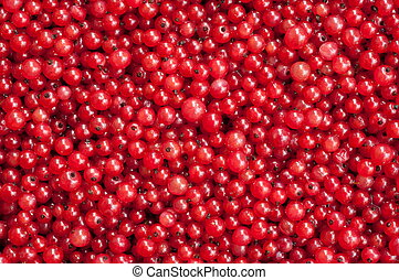 Berries of a red currant - Natural background: berries of a...