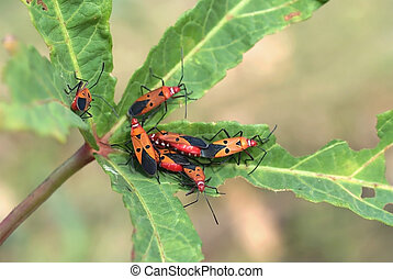 Pests - a beautiful pests are live and eat on leaf of...