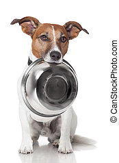 affamé, chien, nourriture, bol