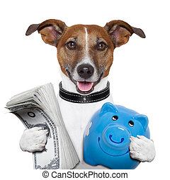 money dog holding a blue piggybank