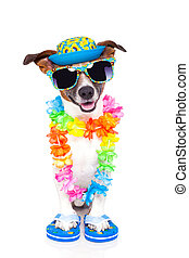 dog on vacation with hawaiian lei