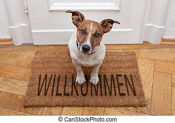 Daheim, herzlich willkommen, hund