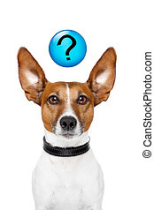 Ask the dog - Dog asking with a question mark on top