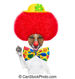 clown dog with red wig and hat - clown dog with red wig and...