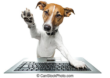 perro, computadora, PC, tableta