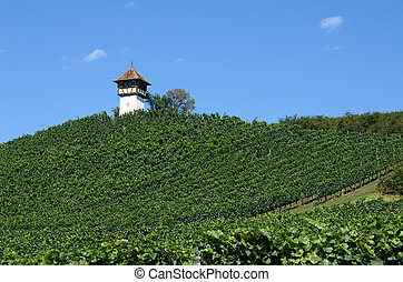 Vineyards on Bodensee - Haltnau vineyards near Meersburg...