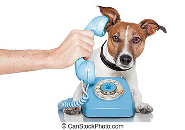 dog on the phone with male hand - dog phone telephone