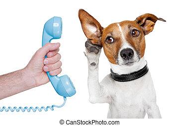 cão, telefone, macho, mão