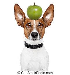 loco, perro, grande, perezoso, ojos, manzana