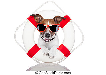 lifesaver dog - dog with red and white lifesaver and a hat