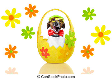 dog in colorful easter egg