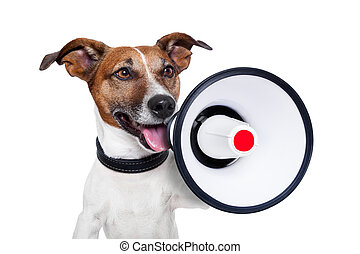 dog megaphone - dog shouting into a white and red megaphone