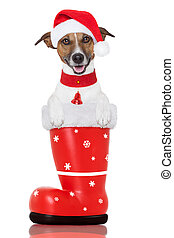 christmas dog in a red santa boot - santa christmas dog in a...