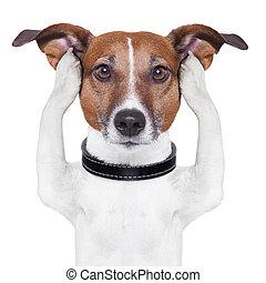 cubierta, orejas, perro
