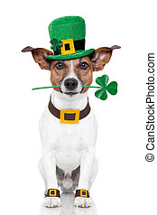st patricks day dog with a clover