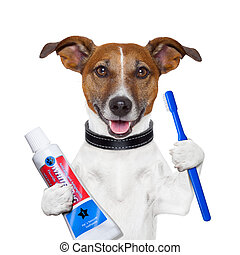 teeth cleaning dog with toothpaste and toothbrush