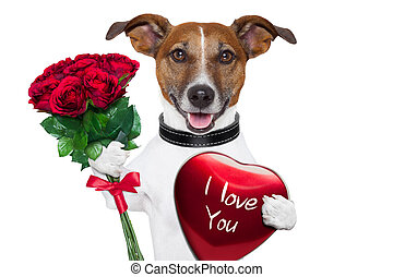 valentine dog with a bunch of red roses and a red present...