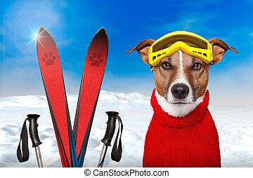 invierno, perro, nieve
