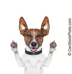 idiot, fou, pattes, haut, chien
