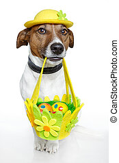 Dog holding colorful easter basket - Dog holding colorful...