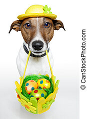 Dog holding colorful easter basket