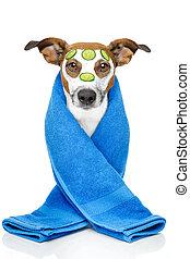 dog with a beauty mask - wellness dog spa