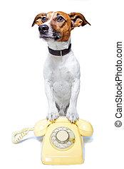 dog phone call
