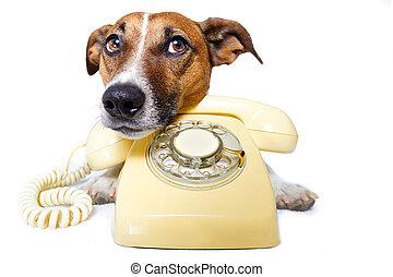 teléfono, llamada, perro