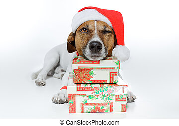 christmas dog santa