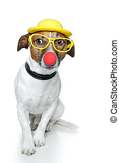 funny dog nose hat glasses