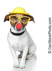 funny dog nose hat glasses