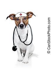 médico, perro,  doctor