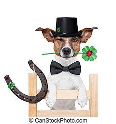 chaminé, Varredor, cão