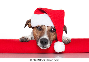christmas dog santa baby red hat