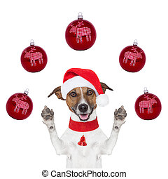 christmas dog with santa hat and balls around