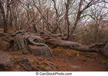 craggy gardens - Craggy Gardens Appalachian Hiking Trail Fog...