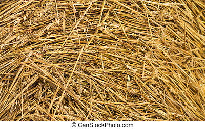 Straw Fodder Bales in Winter on a snowy field