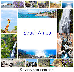 African wild animals collage, fauna diversity in Kruger Park, natural themed collection background, beautiful nature of South Africa, wildlife adventure and travel