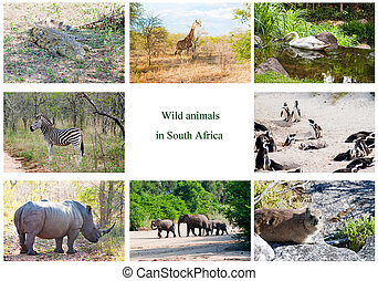African wild animals collage