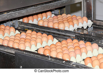 Eggs in factory