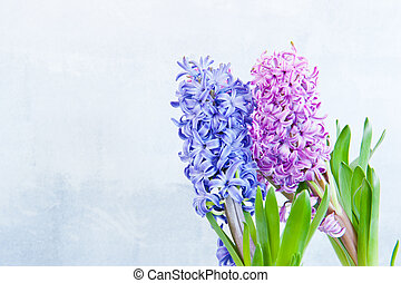 Hyacinths - Three hyacinth in the right side of the frame