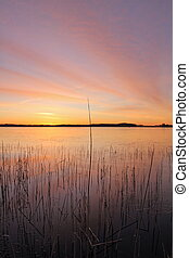 lake bank - a lake bank in the sunrise on a cold winter...
