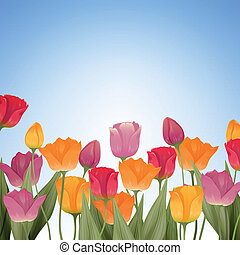 Colorful Tulips - Vector Illustration of Colorful Tulips