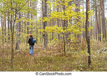 sozinha, andar, mulher, floresta