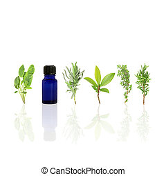 Essential Aromatic Herbs - Herb leaf selection of sage,...
