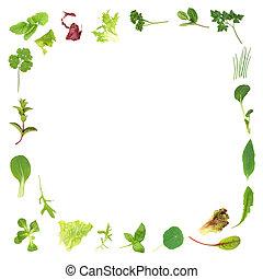 Herb and Lettuce Leaf Border - Selection of fresh salad...